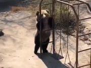 What A Flexible Bear