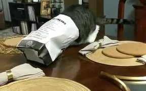 Cats Love French Fries Too