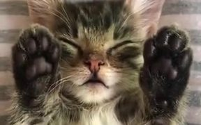 A Sleepy Cat With Upside Cute Toes!