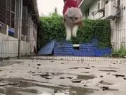 Meet Superman's Pet Cat!