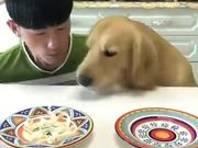 Meet The Hungriest Dog Of This Planet!