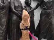 Doggo Wants Some Love!