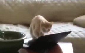 Aggressive Typing Cat!