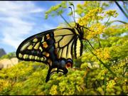 The Butterfly Year in Review