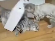 When Cute Cats Get Screwed