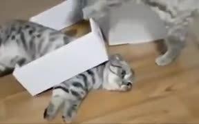 When Cute Cats Get Screwed