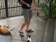 Encounter With A Playful Cat