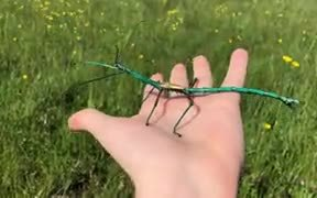 Of Stick Insects And Creativity