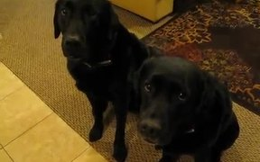 Funny Dog Snitches On Sibling