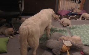 Dog Mother Teaches Her Puppies