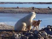 Bear & Dog