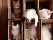 Set Of Open Boxes With Cats In Them