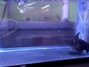 Fish Turns Into A Dangerous Cannibal