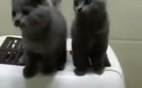 Find Friends Who Can Sync With You Like These Cats
