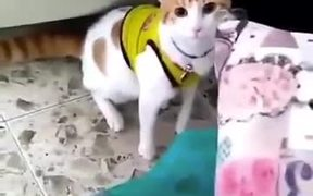 A Meow-Ligan With A Loud Voice