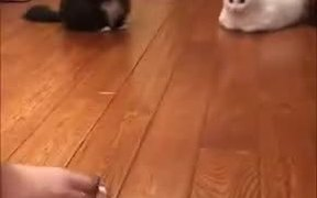 Cat's Reaction Towards The Things You Get Them