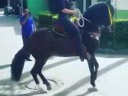 Tap Dancing Horse In Town