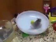 Perky Hamsters