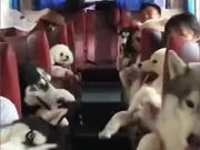The Best Dog Bus Service In Town