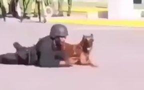 Trained K9? Super Canine