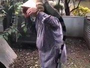 A Humongous Friendly Pet Iguana