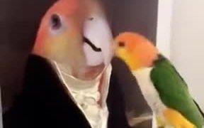 The Portrait Of Dorian Bird