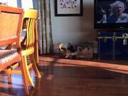 Catto & Puggo Are Engaged In A Huge Fight!