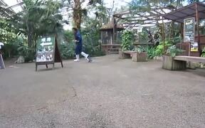 An Adorable Penguin Chasing A Zookeeper