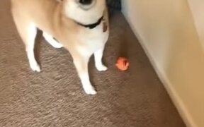 Do You Like Your New Toy