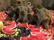 When Monkeys Eat Healthier Than Humans