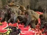 When Monkeys Eat Healthier Than Humans