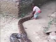A Huge Python With Its Snack