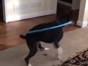 A Hula Hooping Dog