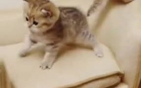 Look At These Kittens Play!