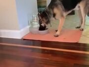 German Shepherd Gets Spooked By Water Bubbles!