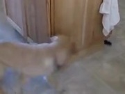 Puppy Going Around In An Endless Loop