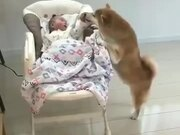 Dogs Can Be Baby Sitters Too!