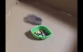Is This Tokyo Drift: Mouse Edition?