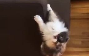 Cat Can't Decide Whether Its A Cat Or Spiderman!
