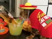 This Cat Is All About The Party Life!