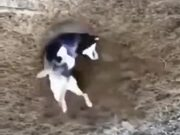 Doggo Absolutely Loves Digging In The Dirt!