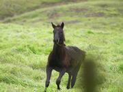 Foal Galloping