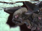 Bat Waking Up