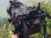 A Camera Has Been Blessed By Beautiful Butterflies