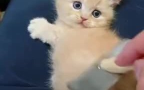 Have You Seen A Kitten Cuter Than This?