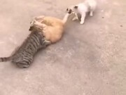 When You Have No Rope For Tug Of War!