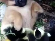 Tiny Puppy Plays With Ducklings!