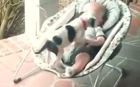 Puppy & Baby