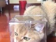 Cat Made A New Friend