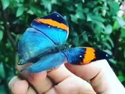 Butterflies Are The Gemstones Of The Insect World